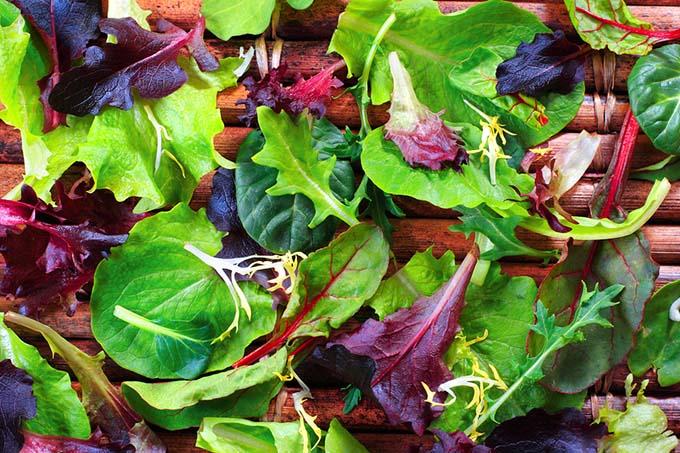 bigstock-Organic-Spring-Mix-Lettuce-4153901