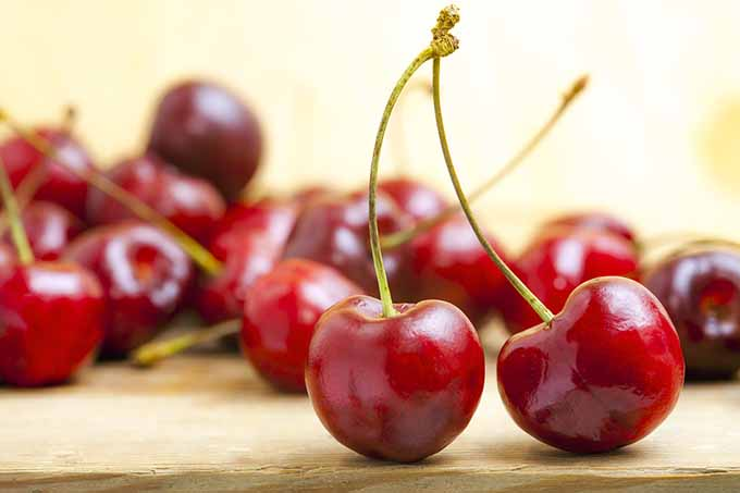 bigstock-fresh-red-cherries-on-a-wooden-45802765