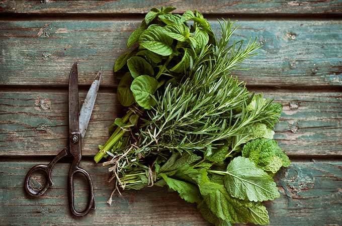 bigstock-Fresh-Herbs-85285349