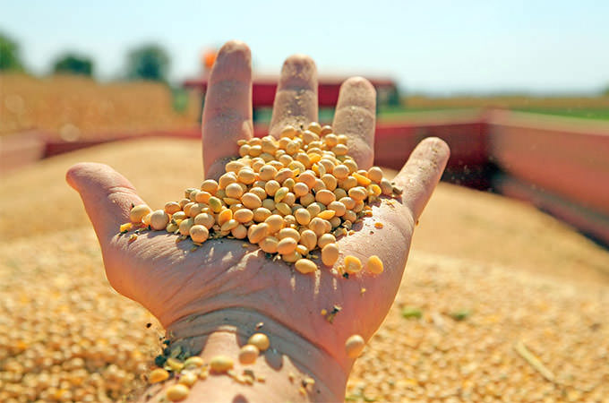bigstock-Soya-Harvesting-24686357